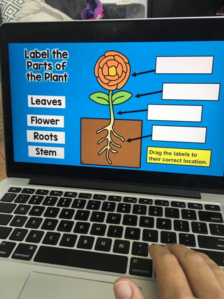 Digital Plants Unit Google